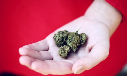 Medical Marijuana vs. Opioids: A Look at the Pros and Cons