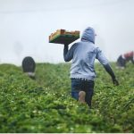 Labor Trafficking Preys on Undocumented Midwestern Migrant Workers